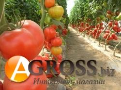 Семена томата Аксиома F1 500 шт - фото 3614