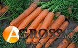 Морковь Сатурно F1