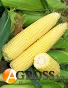 Семена кукурузы Сигнет F1 5000 шт