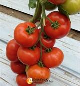 Семена томата Белле F1 500 шт