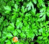 Петрушка листовая Богатырь 1 кг