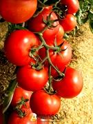 Семена томата Зульфия (73-610) RZ F1 100 шт