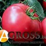 Семена томата Пандароза F1 500 шт