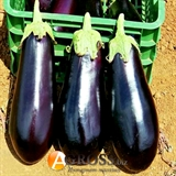 Семена баклажана Надир 1000 шт