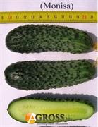 Семена огурца Монисия F1