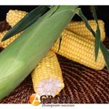 Семена кукурузы Оватонна F1 5000 шт