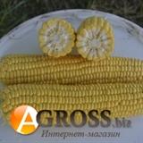 Семена кукурузы Джамала F1 1000шт.
