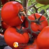 Семена томата Тобольск F1 1000 шт