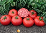 Семена томата Томск F1