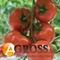 Семена томата Беллавиза F1 100 шт - фото 3616