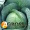 Семена капусты Томас F1 2500 шт - фото 3709