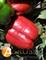 Семена перца Красный Рыцарь X3R F1 500 шт - фото 3771