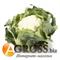 Семена капусты цветной Каспер F1 1000 шт - фото 3793
