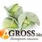 Семена капусты Корсума F1 (калибр.) 1000 шт - фото 8159