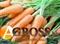 Семена моркови Кордоба F1 калибр. 1,6 - 1,8 (100 000 шт) - фото 8211